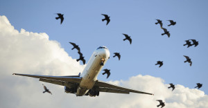 sunlit-airplane-taking-off-birds-close-up -stentor application Acoustic Hailing Device -Acoustic Hailing -Speaker